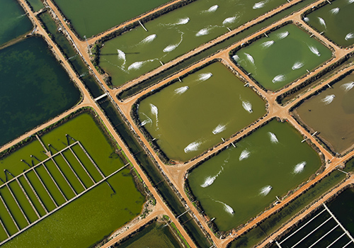 Arial view fish farming